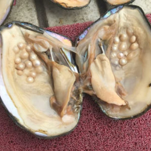 Monster Oyster Pearls